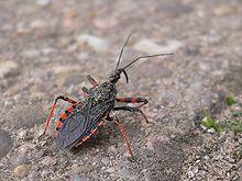Die gefährlichsten Insekten, die den Urlaub zum Horrortrip machen