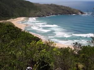 Unbekanntes Lebewesen in Brasilien entdeckt
