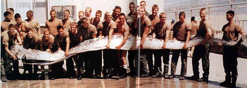 Copia de 800px mekongnaga der grösste fisch der welt 12 m und