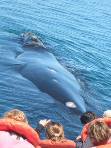 Wale hautnah Ecuador
